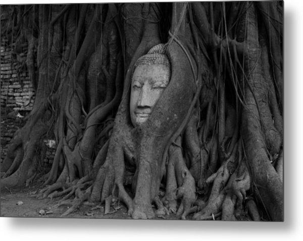 Buddha Head In Roots Of Bodhi Tree Metal Print by Zestgolf