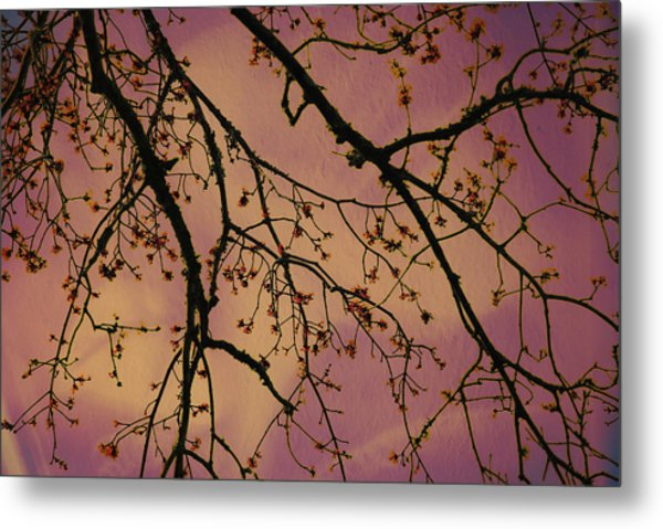 Budding Tree Metal Print