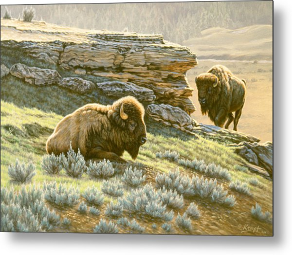 'buffalo At Soda Butte' Metal Print