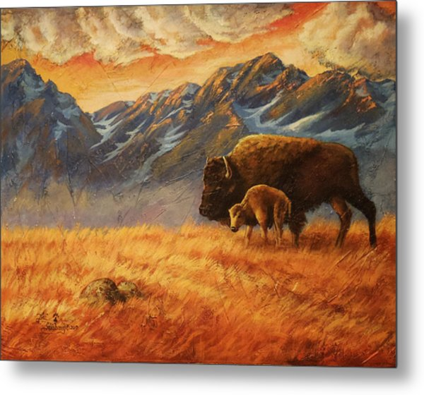 Buffalo From The Beartooths Metal Print