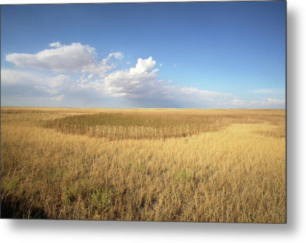 Buffalo Gap National Grassland Metal Print by Peter Falkner/science Photo Library