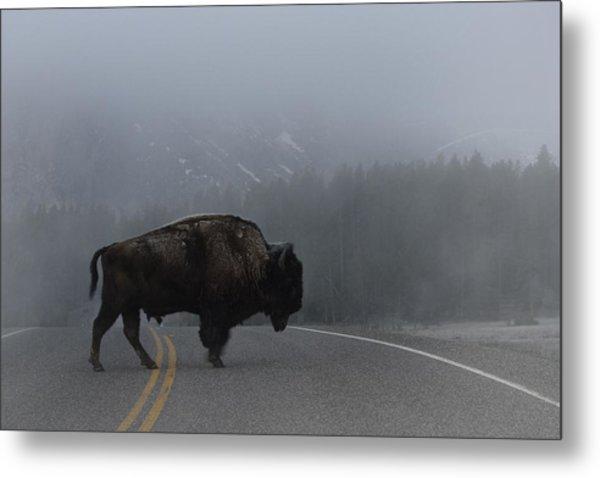 Buffalo In The Mist Metal Print