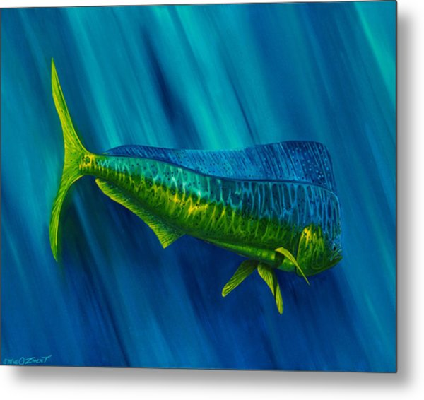 Metal Print featuring the painting Bull Dolphin by Steve Ozment