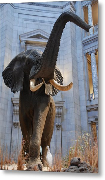 Bull Elephant In Natural History Rotunda Metal Print