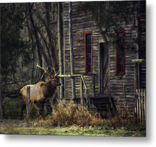 Bull Elk By The Old Boxley Mill Metal Print
