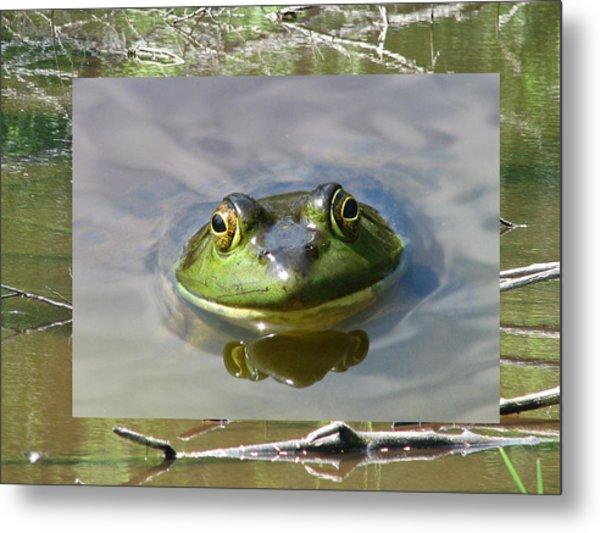 Bull Frog And Pond Metal Print