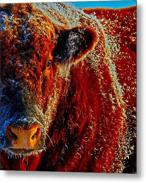 Bull On Ice Metal Print