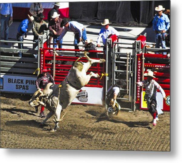 Bull Riding Metal Print by Ron Roberts