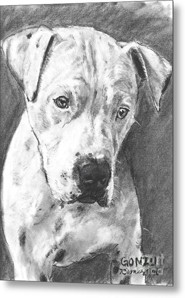 Bull Terrier Sketch In Charcoal  Metal Print