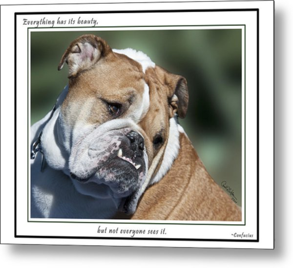 Bulldog Beauty Metal Print