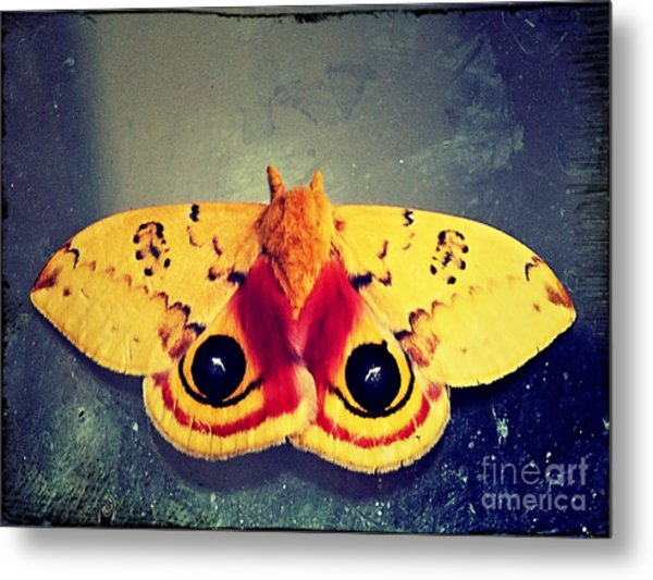 Bullseye Moth Metal Print