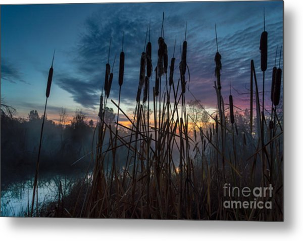 Bulrush Sunrise Metal Print