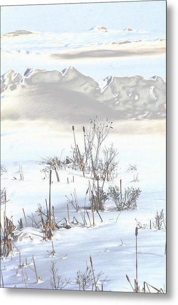 Bulrushes In Snow Metal Print by Carolyn Reinhart