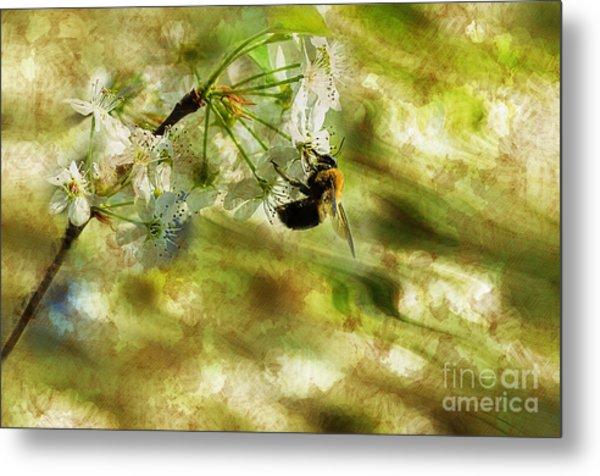 Bumble Bee Eating Sweet Nectar Metal Print by Dan Friend