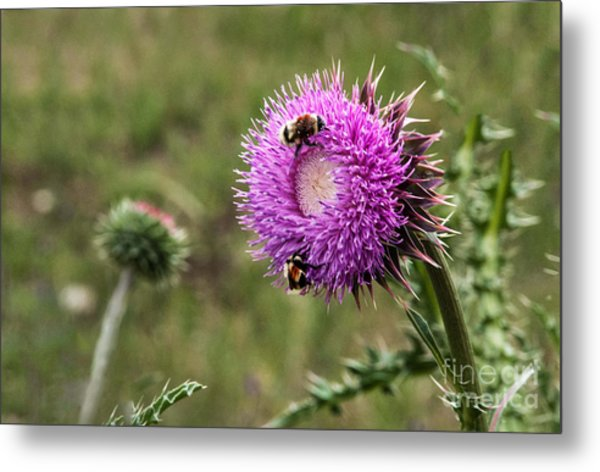 Metal Print featuring the photograph Bumble Bees by Mae Wertz