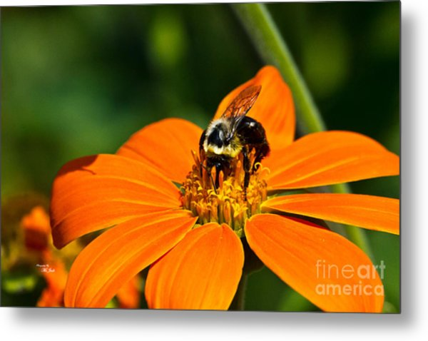 Bumblebee Hard At Work Metal Print