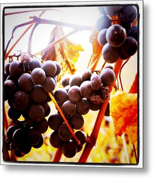 Bunches 3   Metal Print