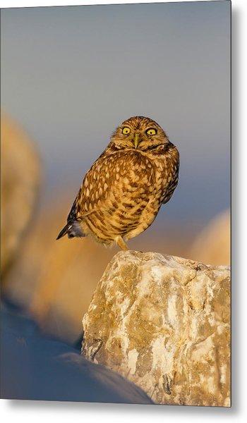Burrowing Owl (athene Cunicularia Metal Print