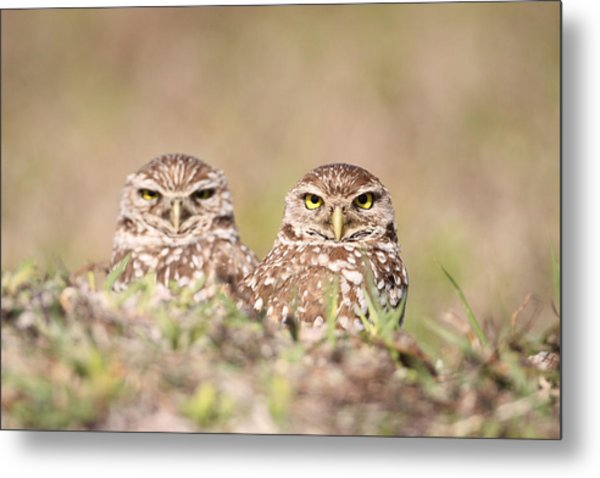 Burrowing Owl Pair Metal Print