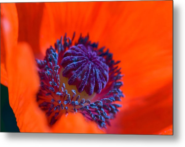 Bursting With Colour Metal Print