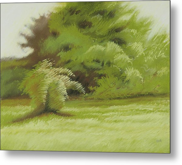 Bush And Brush Metal Print by Bruce Richardson