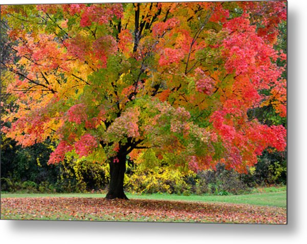 Busse Woods Fall Color Metal Print