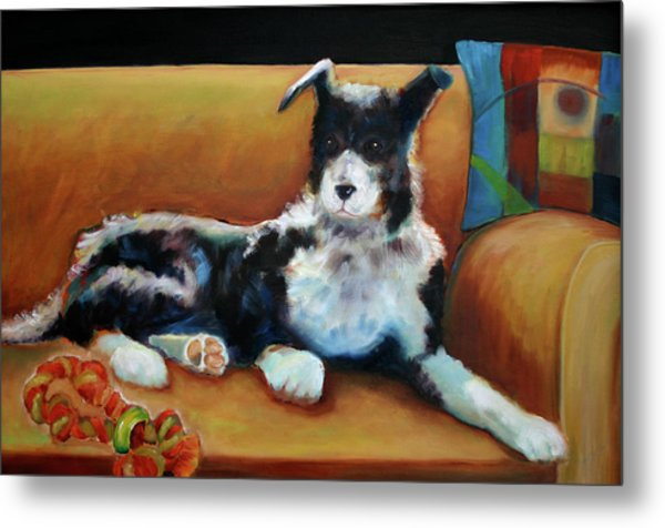 Buster The Border Collie Metal Print