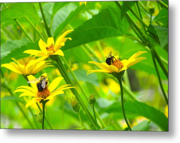 Busy Bees Metal Print by Andrea Dale