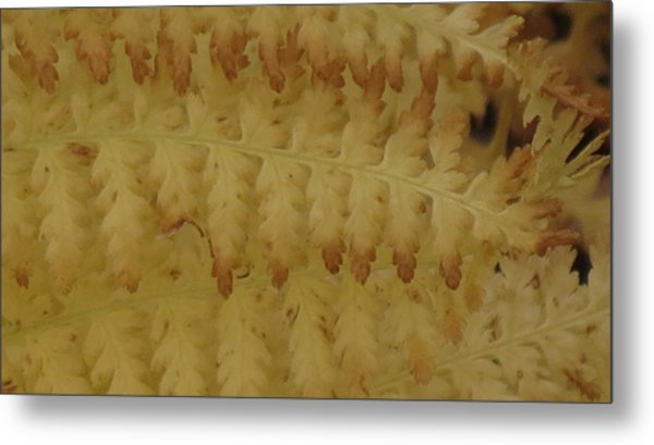 Butter Ferns Metal Print