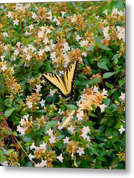 Butterflies Are Free Metal Print