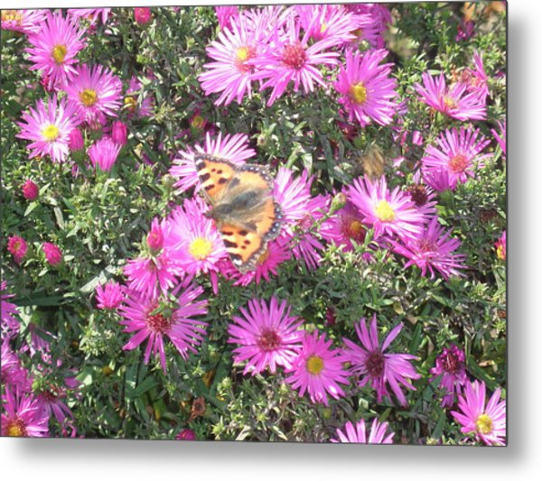 Butterfly And Pink Flowers Metal Print