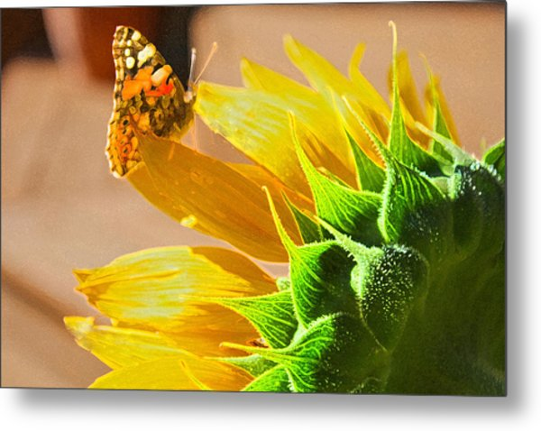 Butterfly And Sunflower Meeting Metal Print
