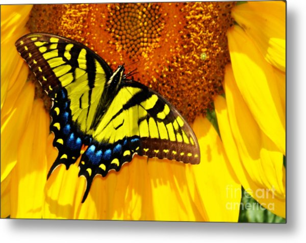 Butterfly And The Sunflower Metal Print