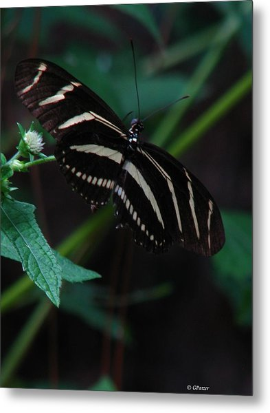 Butterfly Art 2 Metal Print by Greg Patzer