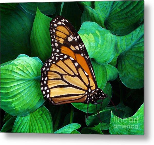 Butterfly Be Still Metal Print