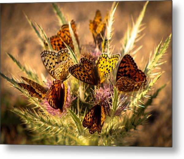 Butterfly Bouquet Metal Print