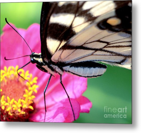 Butterfly Brunch Metal Print