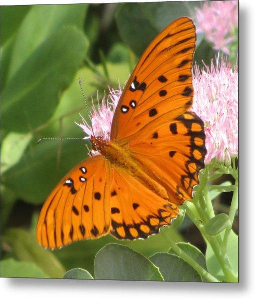 Butterfly Butterfly 2  Metal Print