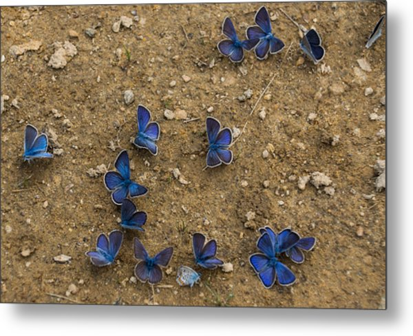 The Butterfly Convention Metal Print