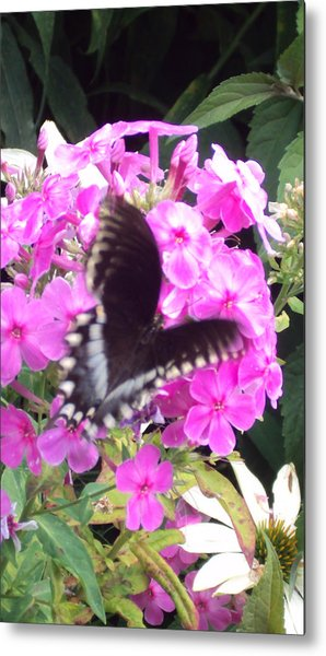 Butterfly Metal Print by Cynthia Harvey