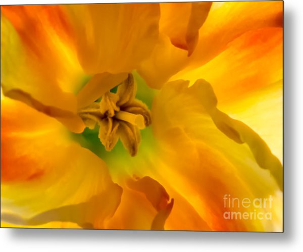 Butterfly Daffodil Springtime Metal Print