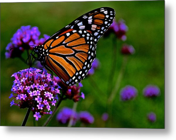 Butterfly Journey Metal Print