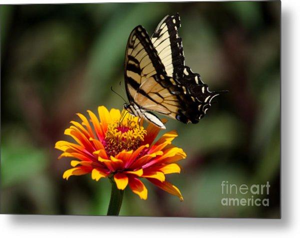 Butterfly Delight Metal Print by Nancy Edwards