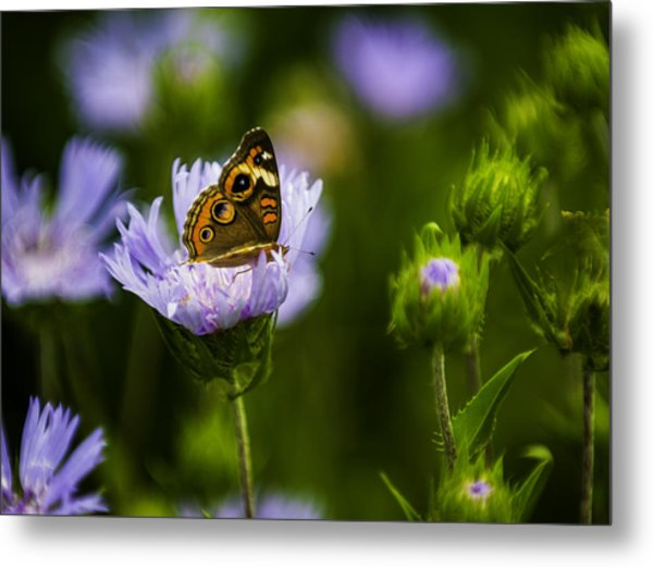 Butterfly In Field Metal Print