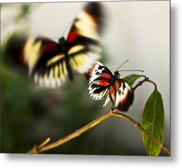Butterfly In Flight Metal Print