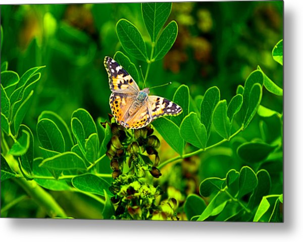 Butterfly In Paradise Metal Print