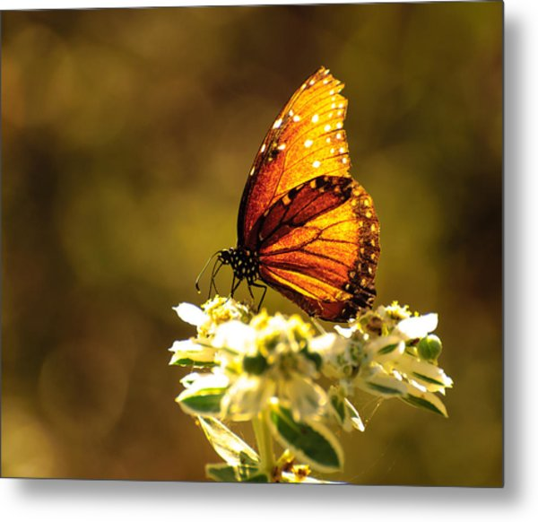Butterfly In Sun Metal Print