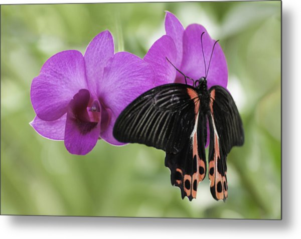 Butterfly Magic Metal Print