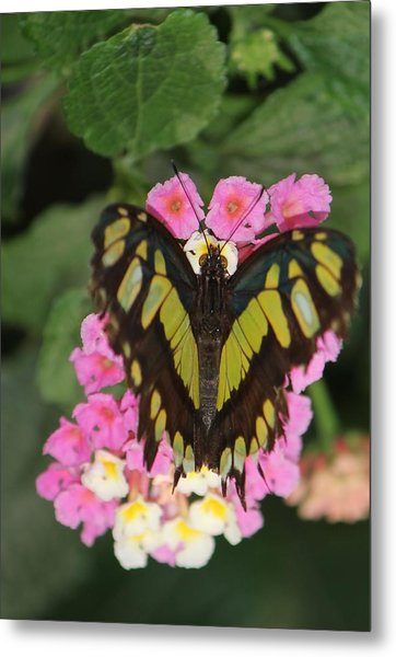 Butterfly Of Love Metal Print