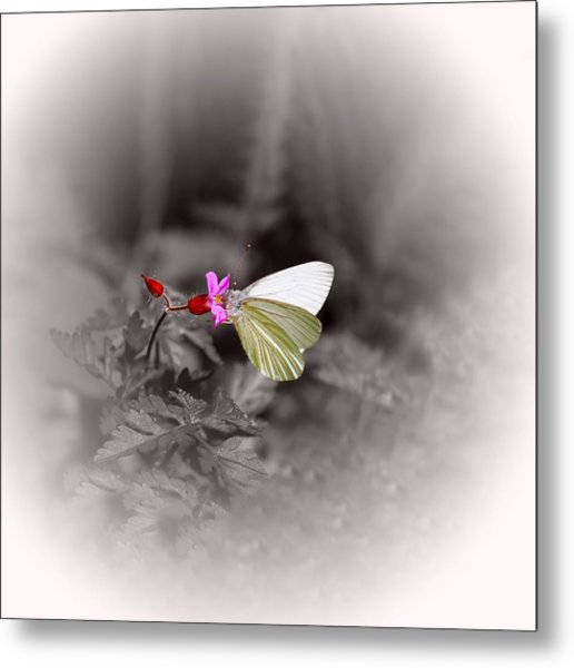 Butterfly On A Pink Flower Metal Print